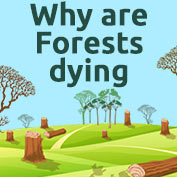 Why are Forests Dying? - Square Thumbnails Image