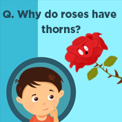 Why do roses have thorns? - Square Thumbnails Image