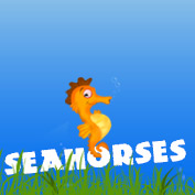 Seahorse Facts and Information - Square Thumbnails Image