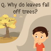 Why do Leaves fall off Trees? - Square Thumbnails Image