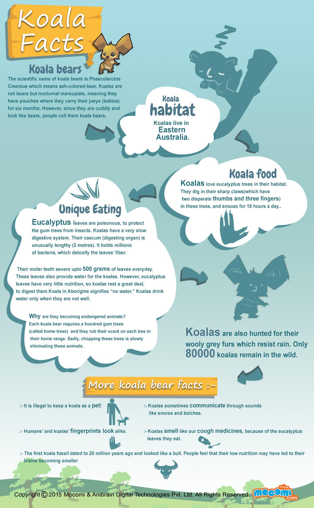 Koala Bear Facts And Information General Knowledge Mocomi Kids