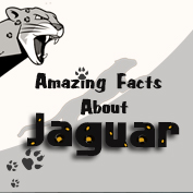 Jaguar Facts and Information – Square Thumbnails