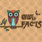 15 Fun Facts about Owls – Square Thumbnails