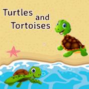 Turtle vs Tortoise – Square Thumbnails