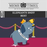 Meme Times - Animated News - Home Page - Mocomi Kids