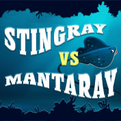 Difference between Stingrays and Manta Rays – Square Thumbnails