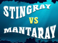 Stingrays vs Manta Rays