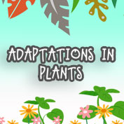 Adaptations in Plants - HP