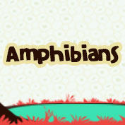 Amphibians Facts Square Thumbnail