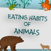 Eating Habits of Animals – Square Thumbnails