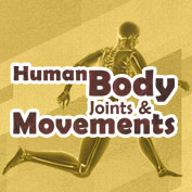 Human Body Joints and Movements – HP