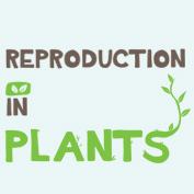 Reproduction in Plants – Square Thumbnails