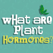 Plant hormones and their functions