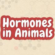 Hormones in Animals - Square Thumbnails