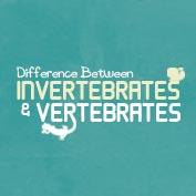 Difference between vertebrates and invertebrates