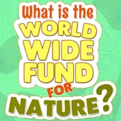 World Wide Fund for Nature – Square Thumbnails