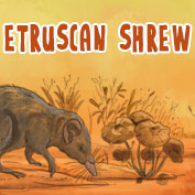 Etruscan Shrew Facts and Information