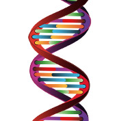 Discovery of Genetics