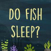 Do fish sleep?
