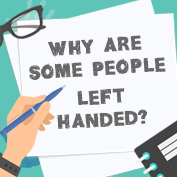 Why are some people left handed?