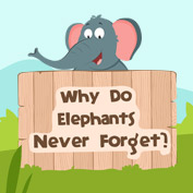 Why Do Elephants Never Forget?